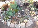 Succulent Rock Garden in Culver City, CA