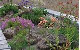 large or small scale rock gardens woodland gardens troughs raised beds