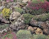 beautiful flower whit rock garden ideas