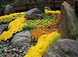 japanese rock garden sedum and sedge