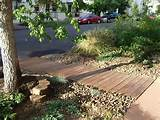 my landscaping ideas 25 breathtaking desert landscaping ideas