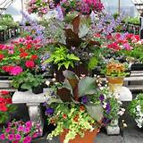 container flower garden ideas with an attitude attractive container