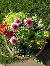 the flexibility of container gardening unlike est ablished garden beds