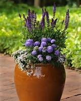 container gardening ideas tips