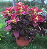 2014 no comments tags container flower gardening ideas