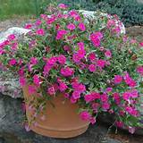 container gardening ideas for flowers container gardening ideas of