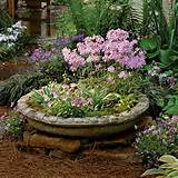 container gardening ideas hostas violas