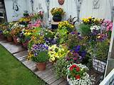 designs container gardening ideas with lovely colorful flowers