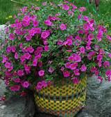 ideas for container gardens container flower gardening ideas