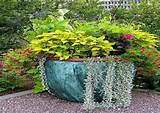 container gardening ideas for flowers garden container ideas potted