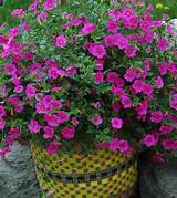 container gardening design ideas with nice purple flowers in container