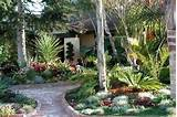Cheap Landscaping Ideas Coconut Trees