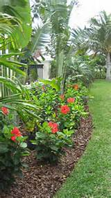 Landscaping Ideas Garden Ideas Go Tropical with Hardy Hibiscus