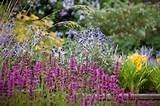 perennial flowers at heronswood garden