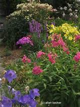 Found on allanbecker-gardenguru.squarespace.com