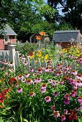 perennial flower gar flowers garden love