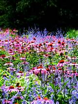 related for perennial flower garden ideas