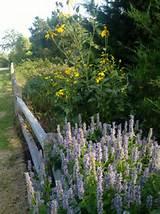 19,184 perennial flower garden Outdoor Design Photos