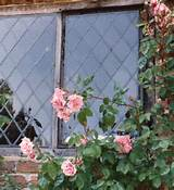 ... Rose Arbor for Rustic Garden Decor : Beauty Rose Rustic Gardening