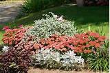 flower bed decorating ideas with fresh flower plants design ideas