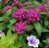 five flowering container garden plants for sun