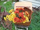 picnic basket w woven tray rustic primitive farmhouse garden decor