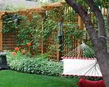 garden trellis ideas improve your garden more beauty with trellis