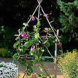 Make a rustic trellis