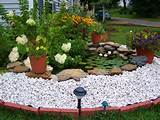pond plants2