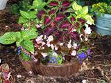 planting in containers container gardening ideas