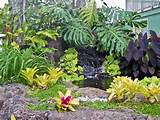 Tropical Garden Landscaping Ideas