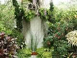 tropical garden designs photos