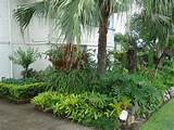 great ideas for florida gardens
