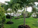 adenium plants and outstanding palm trees with foxy green landscape