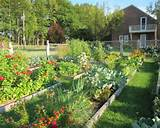 vegetable-garden-decoration-ideas-green-landscape-home-garden.jpg