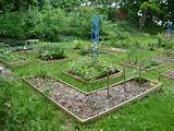 small vegetable garden – gardenaug09 110 [3072x2304] | FileSize: 2 ...