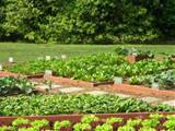 Vegetable Garden Ideas and Designs 2 Vegetable Garden Ideas and ...