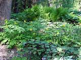 shade garden ideas flower garden gardening landscape design 675x506