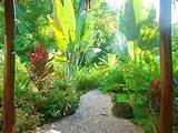 small tropical garden