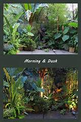 morning evening tropical garden