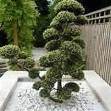 Joanne_Alderson_Garden_Design_Oxfordshire_Zen_8