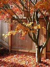 ... decorating easy fall decorating window decorating for fall decorating