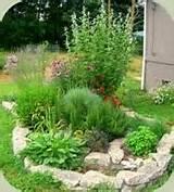 medicinal herb gardening photo