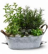 Herb Garden from Florist in Raleigh, NC - English Garden