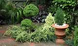 small garden design with herb plants
