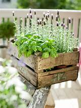 Basil & lavender in a box | The Micro Gardener