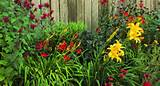 author s hot garden lets good gaudy plants such as gardenview scarlet