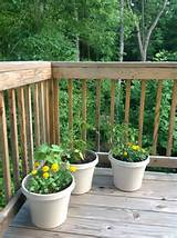 potted herb and veggie garden tomatoes beans cucumbers mixed herbs