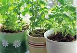 an herb garden is a wonderful thing having a portable herb garden that ...