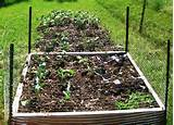 gardening raised beds design with raised vegetable garden bed design
